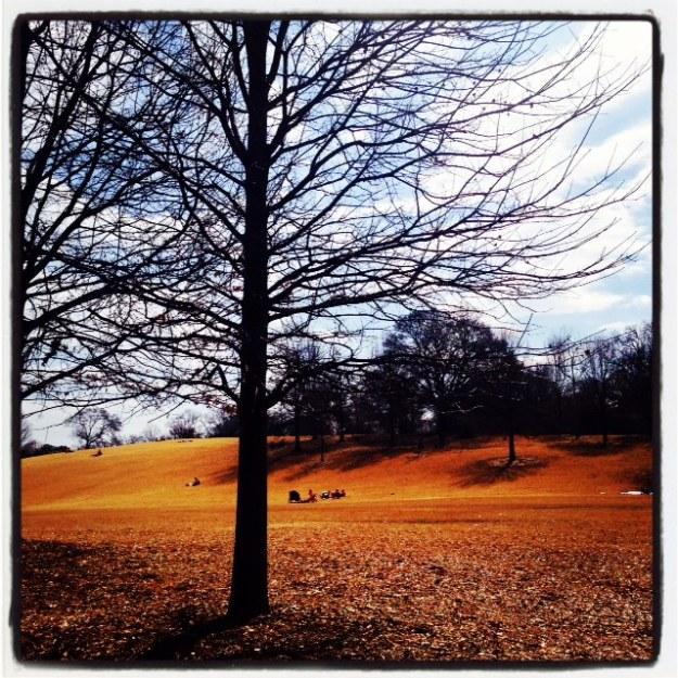 Piedmontpark